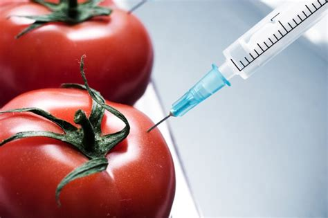 Chinese-French team breed GM tomatoes with age-defying
